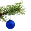 Green branch with blue bauble — Stock Photo