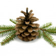 Pine Cone and fir branches - Stock Photo