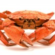 Red boiled crab - Stok fotoraf