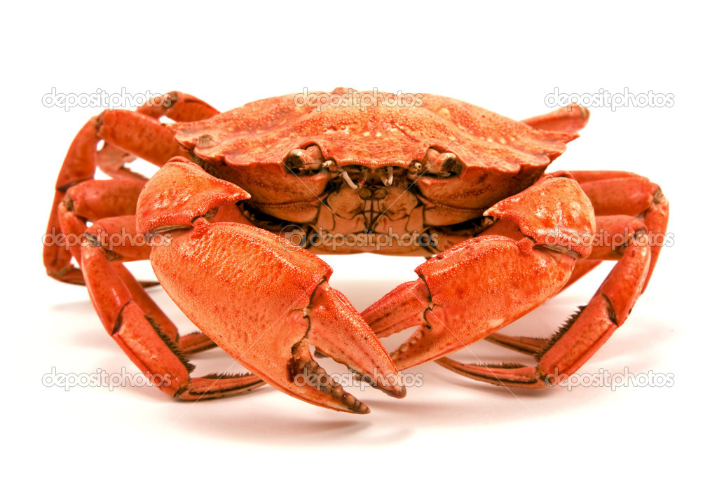 Red boiled crab isolated on white background  Stock Photo #4547374