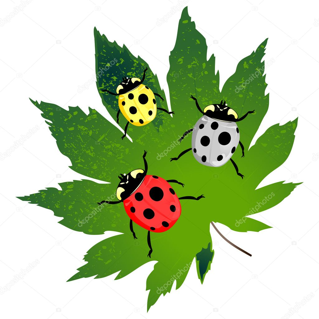 Green leaf and three ladybirds on it. A vector illustration — Stock Vector #4105343