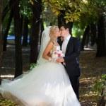 el novio besa a su novia — Foto de Stock