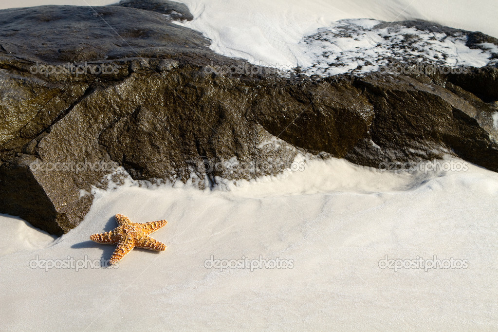 Starfish lays on the beach sand by some large dark rocks. — Stock Photo #4166657