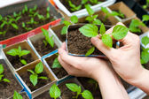 Seedling in female hands — Stock Photo