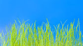 Young green grass, macro — Stock Photo