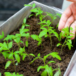 Seedlings in female hands — Stock Photo