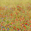 Small songbird in wild flowers - Lizenzfreies Foto