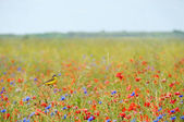 Small songbird in wild flowers — Stock Photo