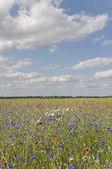 Flowers fields — Stock Photo