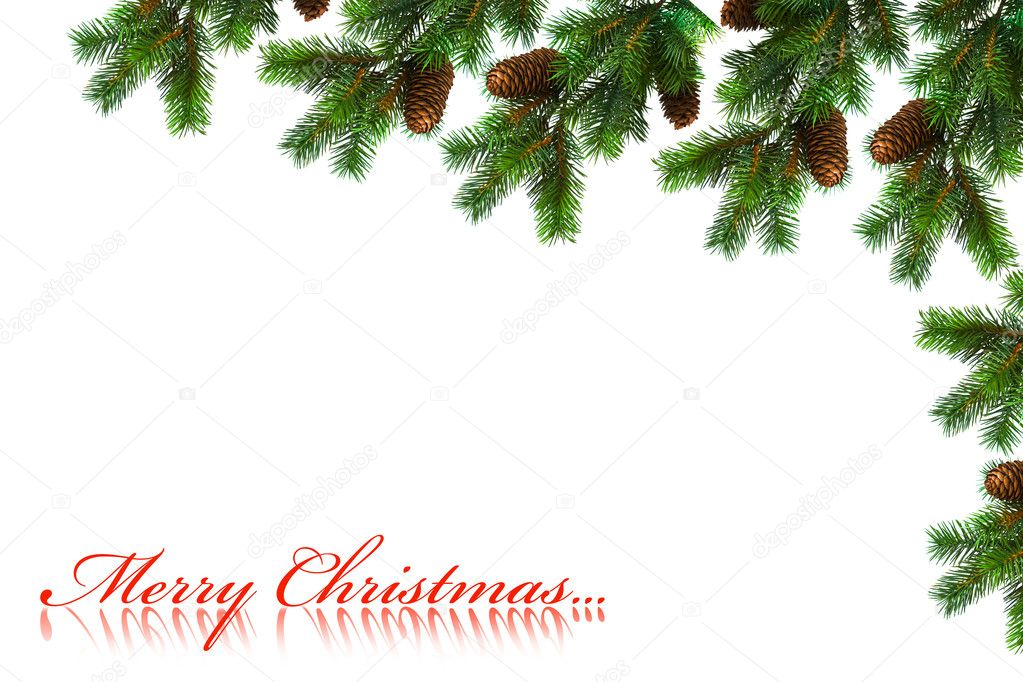 Branch of Christmas tree on white — Stock Photo #3979262