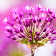 Abstract violet flowers on field - Foto Stock