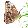 Stock Photo: Beautiful butterfly on a green leaf
