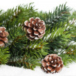 Branch of Christmas tree with pinecone — Stock fotografie