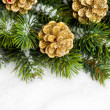 Branch of Christmas tree with pinecone - 图库照片