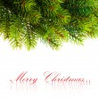 Branch of Christmas tree on white - Foto Stock
