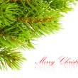 图库照片: Branch of Christmas tree on white