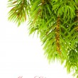 Branch of Christmas tree on white — Stockfoto