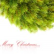 Branch of Christmas tree on white — Foto de Stock