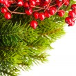 Branch of Christmas tree and european holly — Stockfoto
