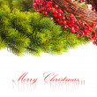 Branch of Christmas tree and european holly - Stock Photo
