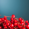 European holly on blue background (shallow DOF) — Stockfoto