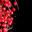 European holly on black background (shallow DOF) — Stockfoto
