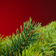 Branch of Christmas tree on red — Stock Photo