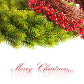 Branch of Christmas tree and european holly — Stock Photo
