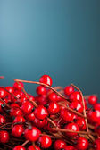 European holly on blue background (shallow DOF) — Foto de Stock