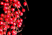 European holly on black background (shallow DOF) — Foto Stock