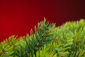 Branch of Christmas tree on red — Stockfoto