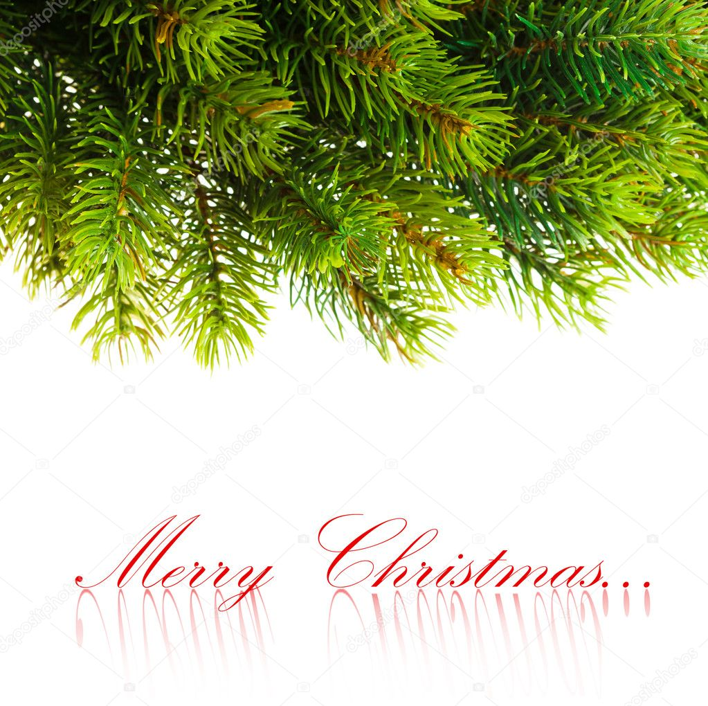 Branch of Christmas tree on white  — Stock Photo #4495526