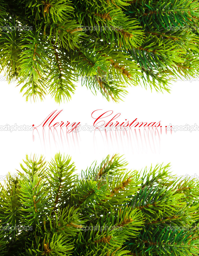 Branch of Christmas tree on white  — Stock Photo #4495537