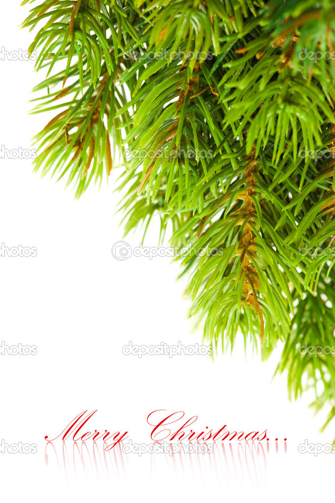Branch of Christmas tree on white  — Stock Photo #4495582