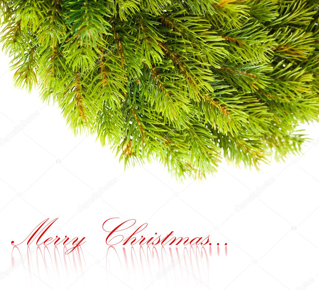 Branch of Christmas tree on white  — Stock Photo #4495603