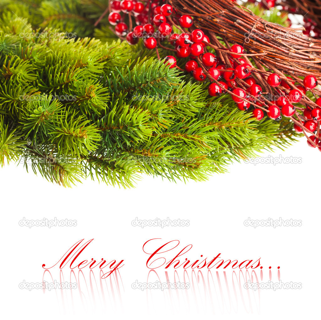 Branch of Christmas tree and european holly  — Foto Stock #4495618