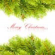 Branch of Christmas tree on white — Stock Photo #4505765