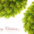 Branch of Christmas tree on white - Stockfoto