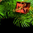 Branch of Christmas tree with gift box — Stok fotoğraf