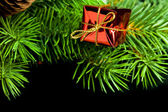 Branch of Christmas tree with gift box — Stockfoto