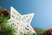 Branch of Christmas tree with star — Stock fotografie