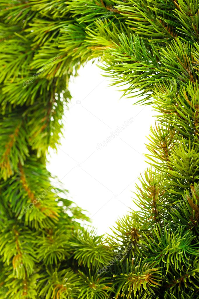 Branch of Christmas tree on white  — Stock Photo #4505726
