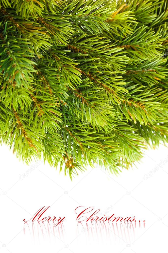 Branch of Christmas tree on white  — Stock Photo #4505741