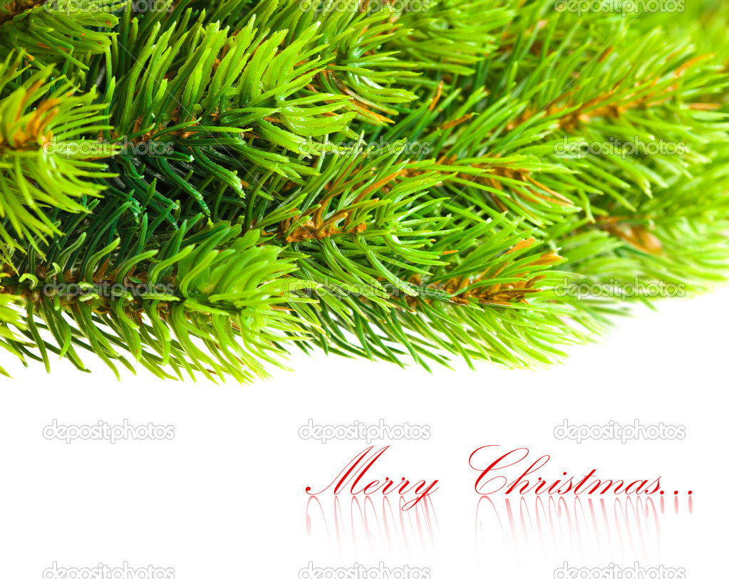 Branch of Christmas tree on white  — Stock Photo #4505785