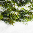 Branch of Christmas tree with snow — Stockfoto