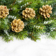 Branch of Christmas tree with pinecone - ストック写真