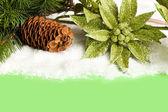 филиал елки с шишка и пуансеттия — Стоковое фото