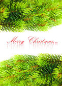 Branch of Christmas tree on white — Foto Stock