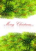 在白色的圣诞节树的分支 — 图库照片