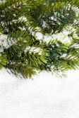 雪とクリスマス ツリーの枝 — ストック写真